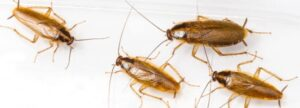 how-to-prevent-roaches-from-returning-if-gone