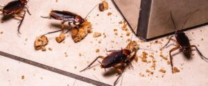 how-many-cockroaches-are-there-if-i-see-one