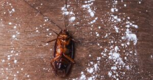 use-boric-acid-to-get-rid-of-cockroaches