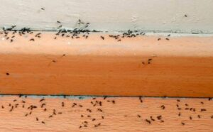 ant-deterrents-can-be-used-to-get-rid-of-ants