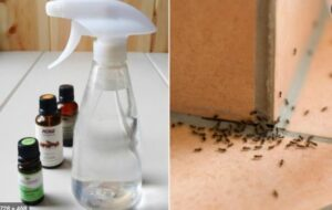anti-ant-sprays-made-from-natural-ingredients-can-be-used-to-get-rid-of-ants
