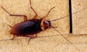 put-a-stop-on-entry-point-of-cockroaches