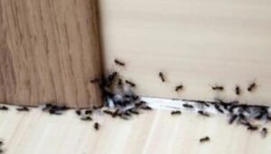 get-rid-of-ants-by-blocking-their-entry-points