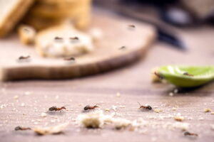 get-rid-of-ants-by-eliminating-their-food-source
