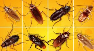 types-of-roaches